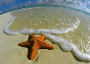 story starfish2